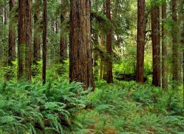 trees5x