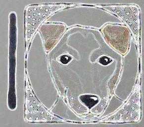 5 Dog/OC