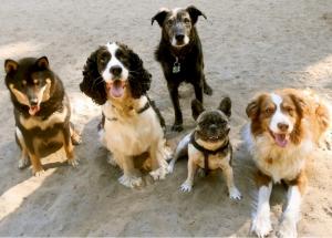 doggy3