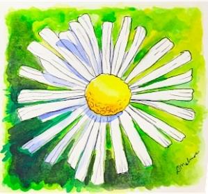 daisy-flour