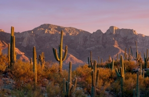 Catalina Mountains, Tucson, Arizona