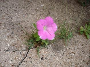 flower-in-crack